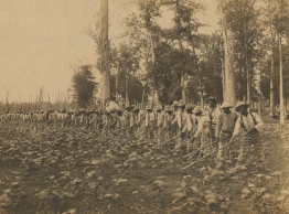 Parchman_prison_convict_labor_1911